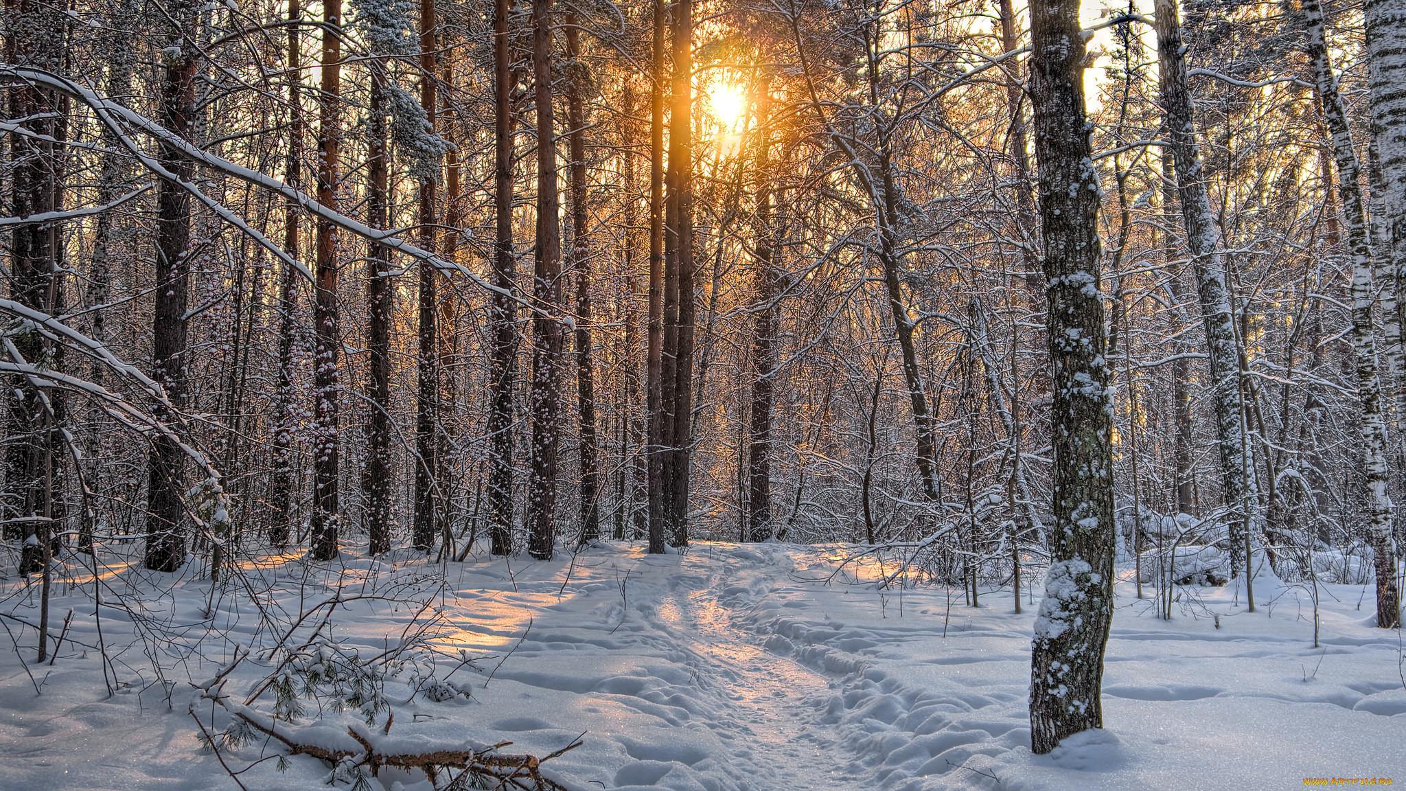 ехать как правильно фотографировать природу зимой для них